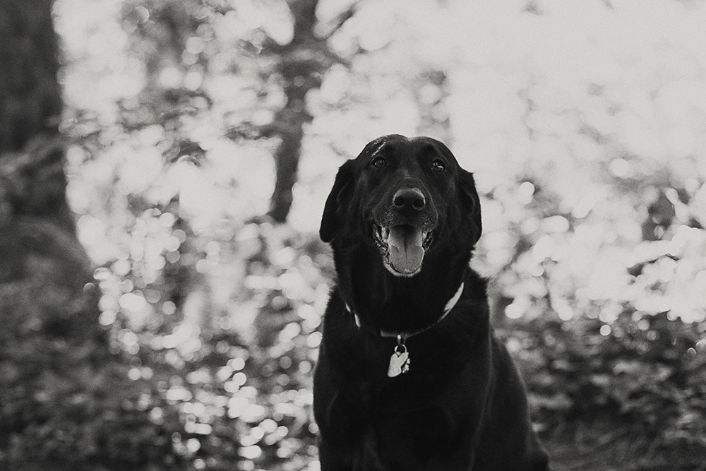 Parksville Family and Pet and Wedding adventure photographer