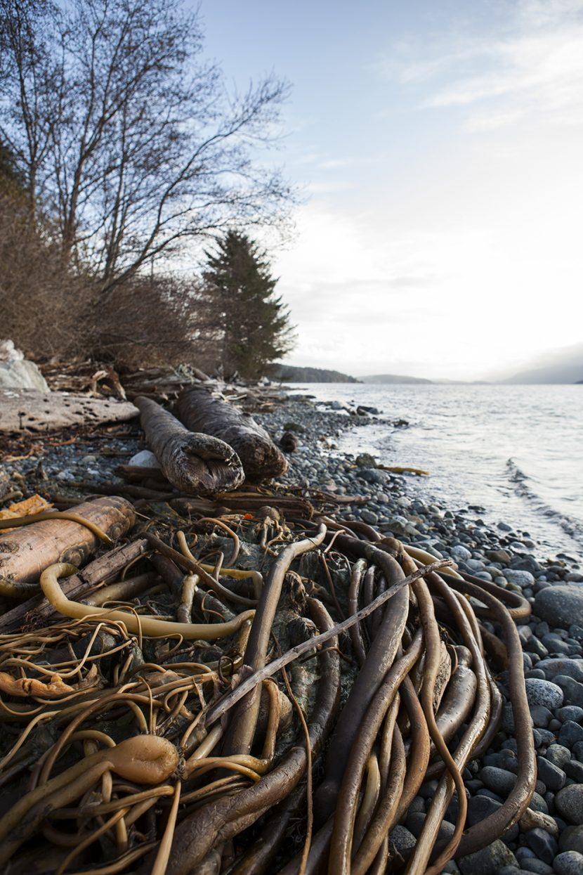Alert Bay Road Trip | North Vancouver Island Road Trip | Vancouver Island Road Trip Ideas